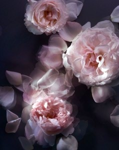 L'EXTASE_CARESSE-DE-ROSES_Ingredients-(2)